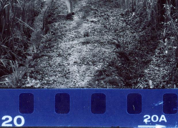 Manifiesto Alegría, fotograma por fotograma