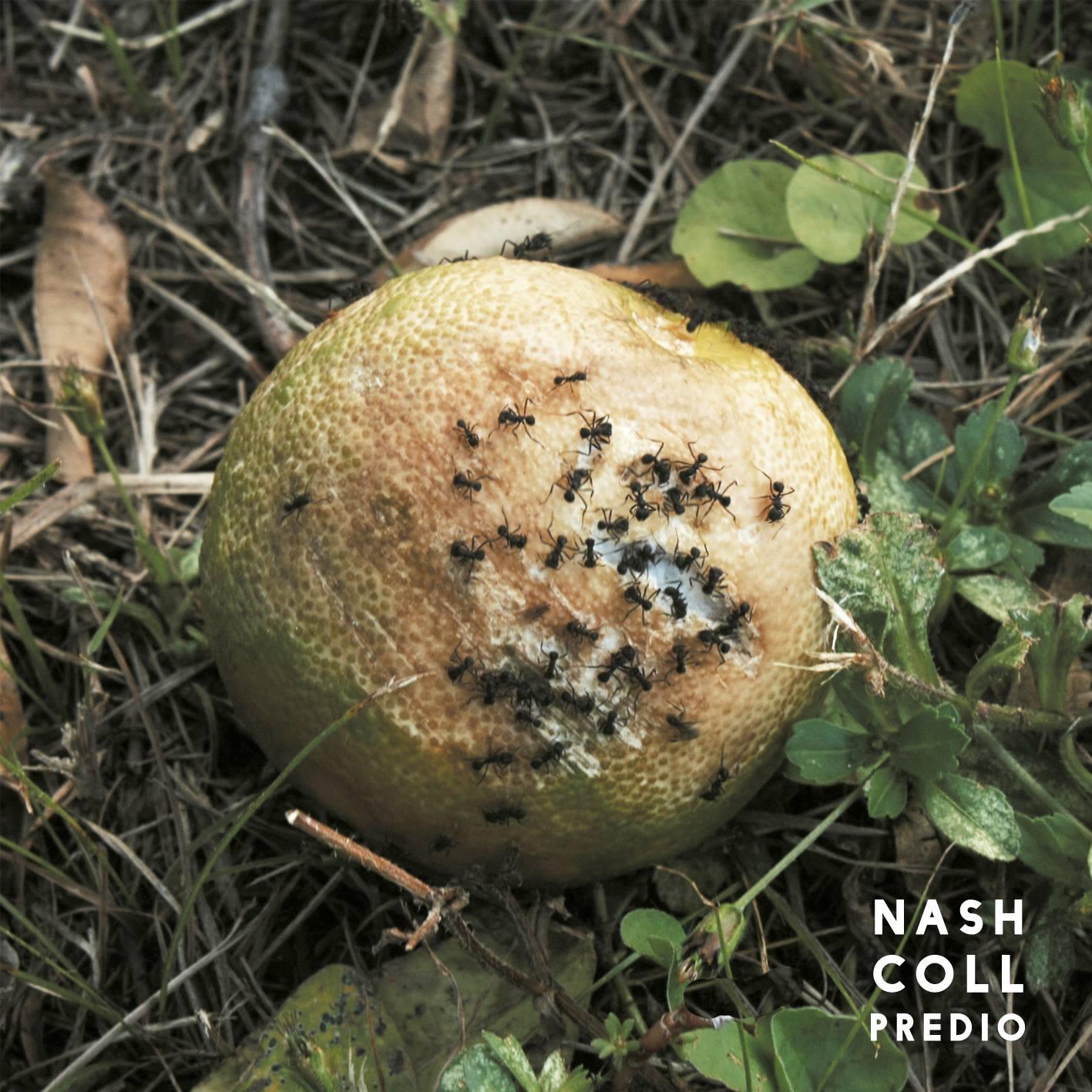 Una voz, mil realidades: Nash Coll presentó Predio